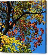 Jewels Of Autumn Canvas Print