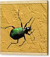 Jeweltone Beetle Canvas Print