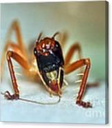 Jiminy Cricket Canvas Print