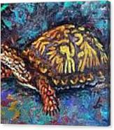Joe Turtle Canvas Print