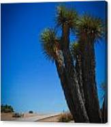 Joshua Tree 4 Canvas Print