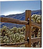 Joshua Tree Cholla Garden Canvas Print
