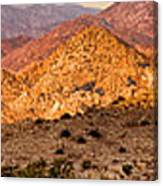 Joshua Tree Sunrise Panorama Canvas Print