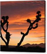 Joshua Trees In The Sunset Canvas Print