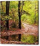 Josie's Brook Trail Canvas Print