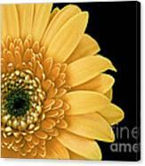 Joyful Delight Gerber Daisy Canvas Print