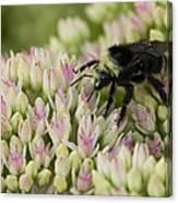Joyous Bee Canvas Print
