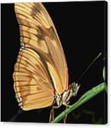 Julia Butterfly Dryas Iulia Portrait Canvas Print