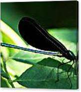 July Dragonfly II Canvas Print