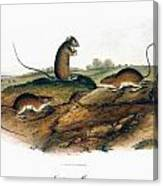 Jumping Mouse, 1846 Canvas Print