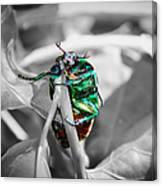 Junebug Canvas Print