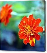 June's Bloom Canvas Print