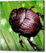 Jungle Beetle Canvas Print
