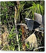 Jungle Flight Canvas Print