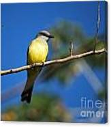Jungle Flycatcher Canvas Print