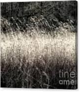 Jungle Grass Canvas Print