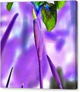 Jungle Iris Canvas Print