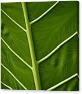 Jungle Leaf Canvas Print