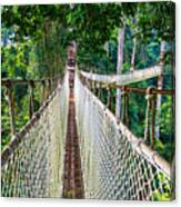 Jungle Walk From High Above Canvas Print
