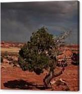 Juniper Canyonlands National Park Canvas Print