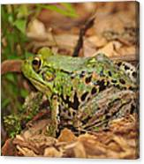 Just A Frog Canvas Print