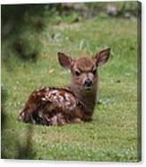 Just Born Bambi Canvas Print