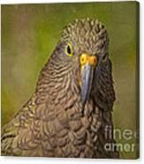 Kea Parrot Canvas Print