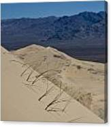 Kelso Dunes Grass Canvas Print