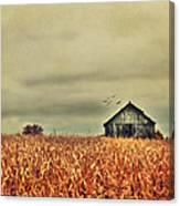 Kentucky Corn Field Canvas Print