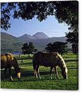Killarney,co Kerry,irelandtwo Horses Canvas Print