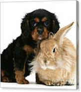 King Charles Spaniel And Rabbit Canvas Print