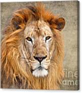 King Of Beasts Portrait Of A Lion Canvas Print