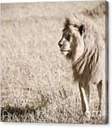 King Of Cats In Sepia Canvas Print