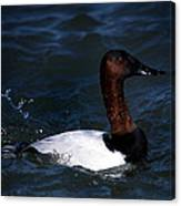 King Of Ducks Canvas Print