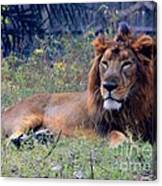 King Of Zoo Canvas Print