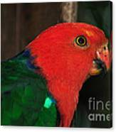 King Parrot - Male 2 Canvas Print