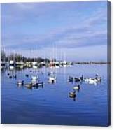 Kinnego Marina, Lough Neagh, Co Antrim Canvas Print