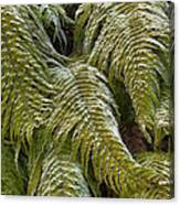 Kiokio Blechnum Novae-zelandiae Covered Canvas Print