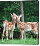 Kiss Me Deer Canvas Print