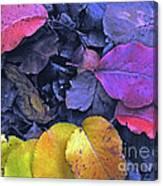 Kiss Of Fall Canvas Print