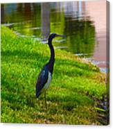 Kissimmee Pond Bird Canvas Print