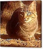 Kit Kat Canvas Print