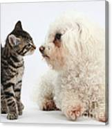 Kitten & Pup Confrontation Canvas Print