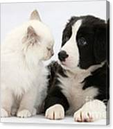 Kitten And Border Collie Pup Canvas Print