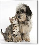 Kitten And Daxie-doodle Puppy Canvas Print