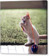 Kitten Catches Feather Toy Canvas Print