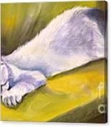 Kitten Dream Canvas Print