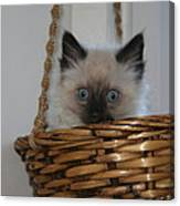 Kitten In Basket Canvas Print