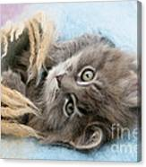 Kitten In Blanket Canvas Print