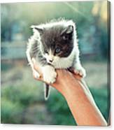 Kitten In Hand, 2010 Canvas Print